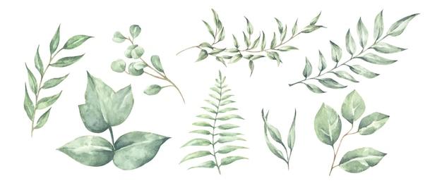 Коллекция зеленых листьев, изолированные на белом фоне