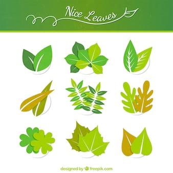 녹색 나뭇잎 컬렉션