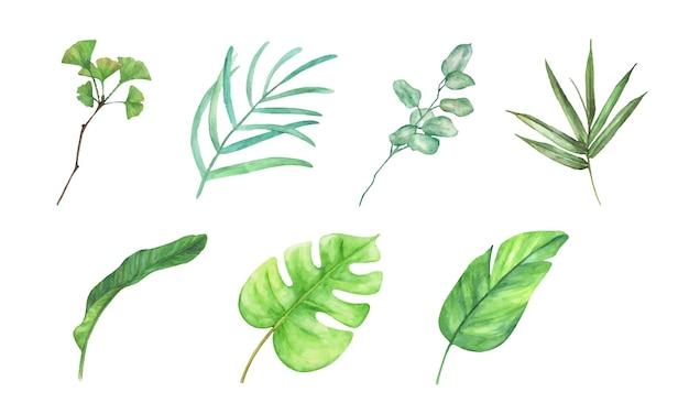 緑の葉の要素のコレクション。水彩セット。