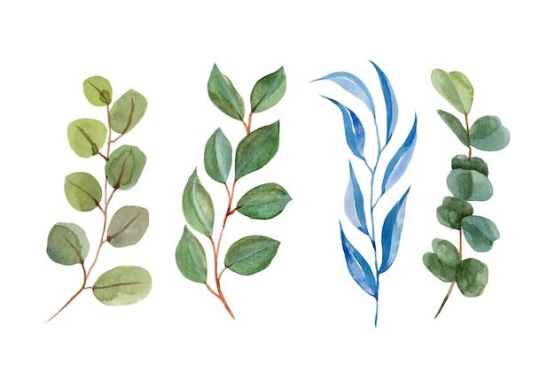 白で隔離される緑の葉ユーカリ