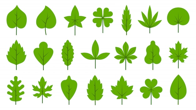 Green leaves flat icon set. bio organic eco simple leaf symbol