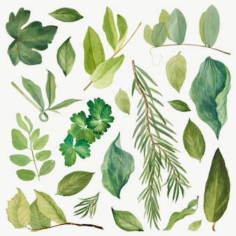 メアリー・ヴォー・ウォルコットのアートワークからリミックスされた緑の葉のイラストセット 無料ベクター