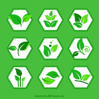 Green leaves logos