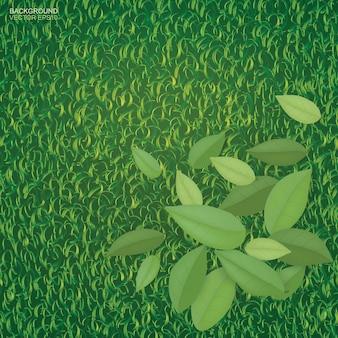 Зеленые листья на фоне зеленой травы для фона.