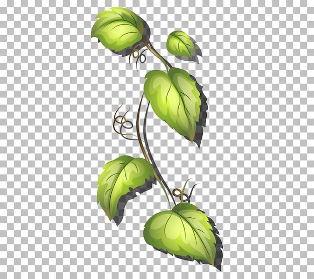 透明な背景に緑の葉