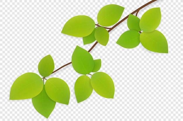 투명 한 배경에 고립 된 나뭇 가지에 녹색 잎