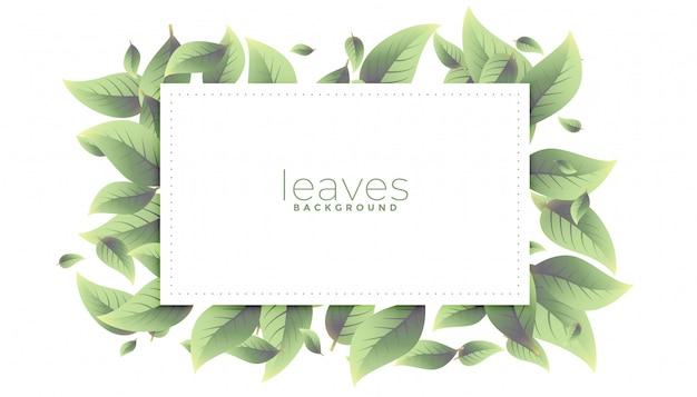 녹색 나뭇잎 사각형 프레임 배경 디자인
