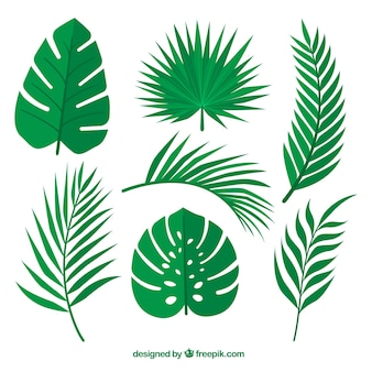 Green leaves set of palm trees