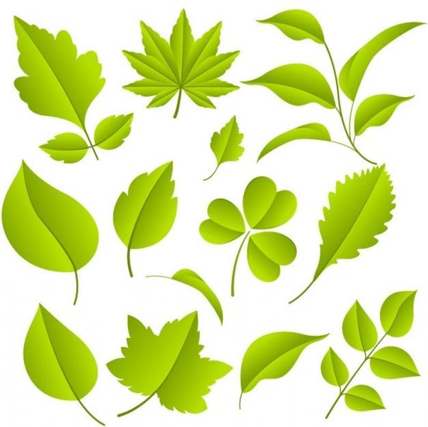Зеленые листья набор векторных