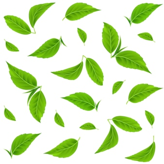Green leaves vector seamless pattern realistic tea leaves summer or spring branches