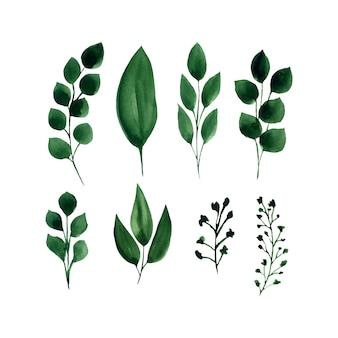 녹색 나뭇잎 벡터 수채화 세트.
