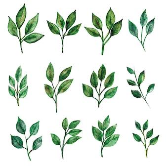 녹색 잎 수채화 장식 세트