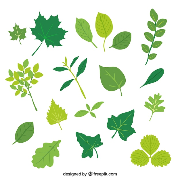 leaf vectors photos and psd files free download rh freepik com leaf vector background leaf vector free