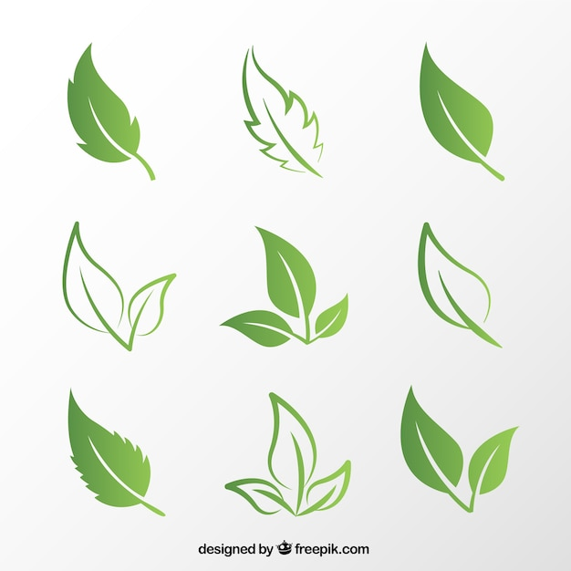 leaf vectors photos and psd files free download rh freepik com leaf vector logo leaf vector image