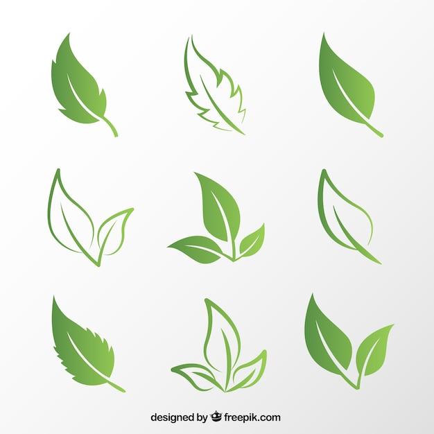 Leaf Vector Art Best Vectors Design