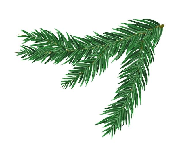 Зеленая сочная ветка ели или сосны. филиал ели, изолированные на белом рождественском элементе.