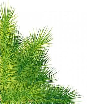 녹색 무성한 가문비 나무 또는 소나무 가지. 화이트 크리스마스 요소에 전나무 트리 분기입니다.
