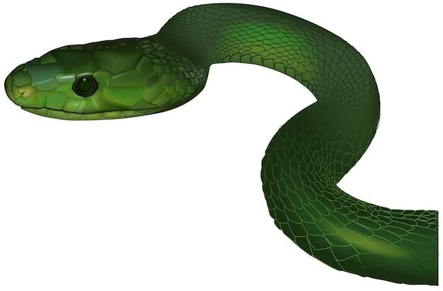 Зеленая мамба deandroaspis angusticeps
