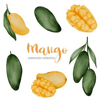 녹색 망고 및 분기와 과일과 잎 수채화 컬렉션에 노란색 익은 망고