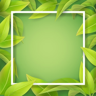 녹색 부드러운 잎과 흰색 프레임. 차 식물 또는 나무의 자세한 잎. 봄 계절 초대 카드에 대 한 배경입니다.