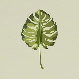 Green monstera leaf design element llustration