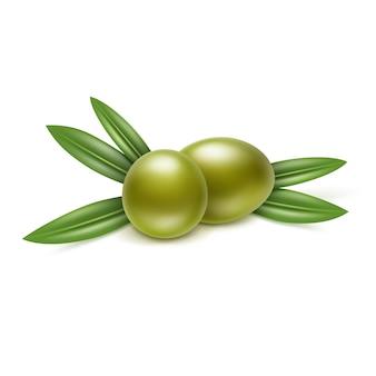 Ветка зеленых оливок с листьями на белом фоне