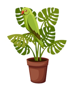 Green parrot sits on potted plant.   illustration  on white background.