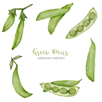 Green peas in watercolor collection with full and cut in half