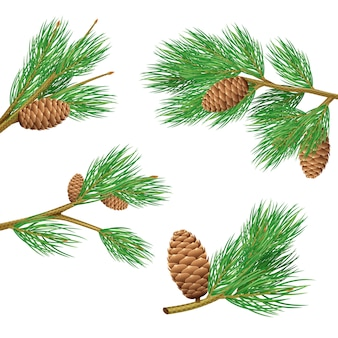 Green pine branches with cones realistic set for decoration isolated vector illustration