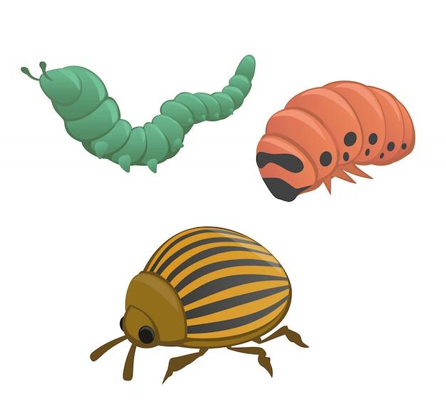Green and pink caterpillar, colorado potato beetle illustration.