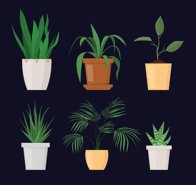 分離されたポットセットの緑の植物。ガーデニングの趣味、美しい植木鉢。屋内植物。