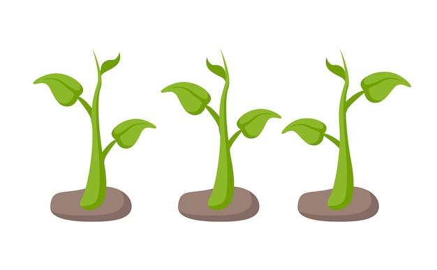 Green plants in garden beds set cartoon style