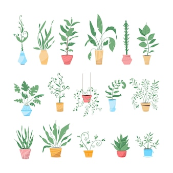 Green plants in pots set isolated objects. potting trees, flowerpots hanging styling indoor