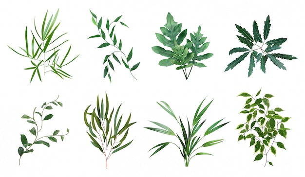 Зеленые реалистичные травы. эвкалипт, папоротник, зелень листвы растений, ботанические натуральные листья травы иллюстрации набор. растение тропический, ботанический и натуральный папоротник