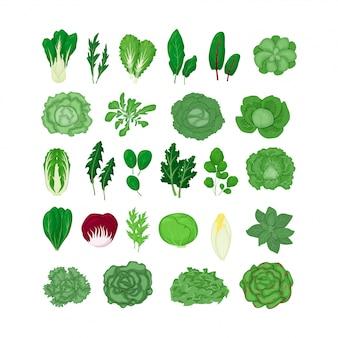 Зеленый салат из овощей листья набор иллюстрации, изолированные на белом в мультяшном стиле. натуральный лист салата.