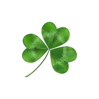Green shamrock leaf symbol of luck. isolated on white illustration. clover decoration as a symbol of irish cultural.
