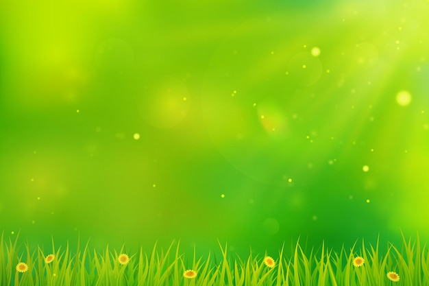 녹색 봄은 잔디, 꽃, 햇빛으로 배경을 흐리게 합니다.