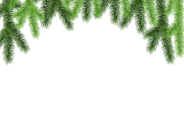 Green spruce branch on white background. fir. realistic christmas tree. vector illustration for xmas  and new year cards, banners, flyers,  party posters.