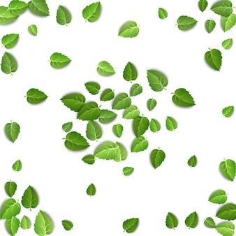 Foglie di tè verde che cadono su sfondo bianco isolato