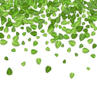 Листья зеленого чая падают на изолированный белый фон