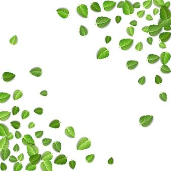 Форма кадра листья зеленого чая, изолированные на белом фоне