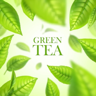 Green tea leaves. organic tea herbal background