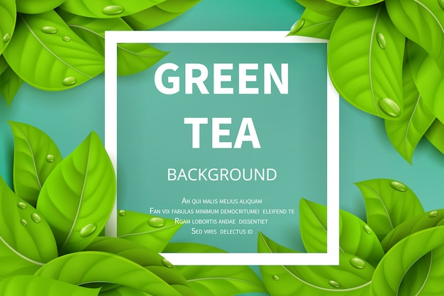 Green tea leaves vector nature background