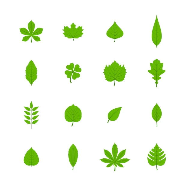 Best free young leaf clips necessary words