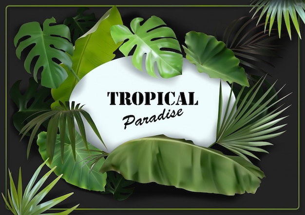 Green tropical leaves background with white oval space