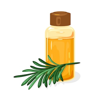 Зеленая веточка сосны сибирской или мелалеуки стоит возле стеклянной банки, закрытой коричневой крышкой.