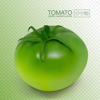 흰색 배경에 녹색 설 익은 토마토. 사실적인 벡터 일러스트 레이 션. 이 토마토는 어떤 배경에도 놓을 수 있습니다.