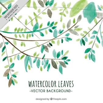 グリーン水彩画の葉