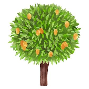 그린 수채화 망고 나무