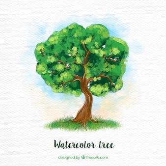 Green watercolor tree